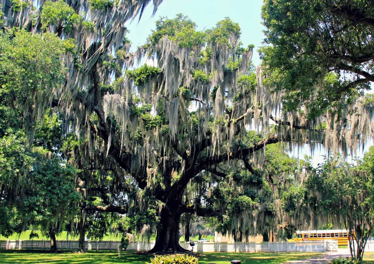 Zwiedzanie Luizjany - plantacje